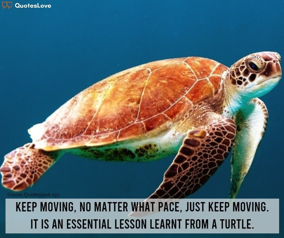 World Turtle Day Quotes, Sayings, Messages, Greetings, Facts, Images, Pictures, Photos, Wallpapers