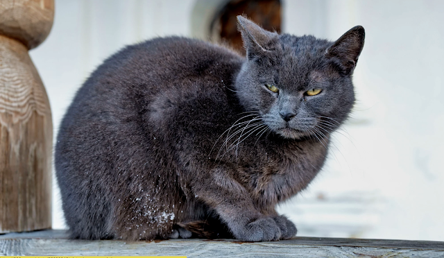 Garbage cat sitting on the porch in the cold by Serg Semin
