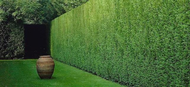 recinzione-con-siepe