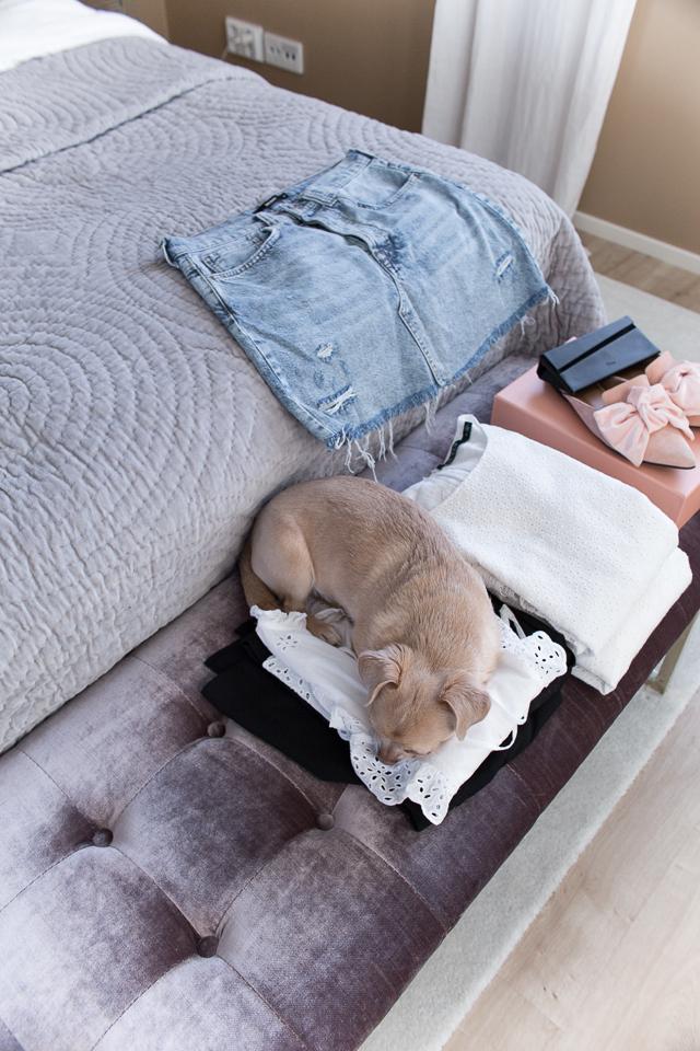 Villa H, chihuahua, makuuhuoneessa, matkapakkaaminen