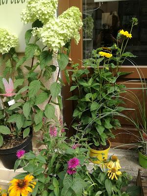 Blütenträume - Dein Blumenladen für jeden Anlass