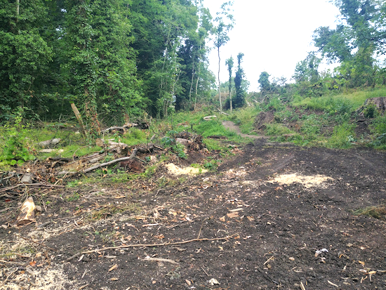 Photograph of wood clearing at Gobions. Image by North Mymms News released via Creative Commons BY-NC-SA 4.0