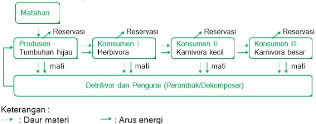 Arus energi dan daur materi
