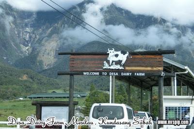 Desa Dairy Farm Mesilau Kundasang