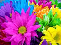 صور زهور 2020 ورود رومانسية اجمل زهور الحب