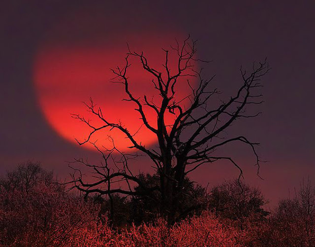 red moon tonight berlin - photo #39