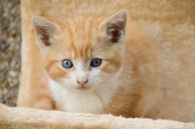 ciri khusus hewan kucing