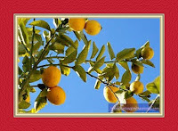 Interpretation of a dream of seeing a lemon tree in a dream for women and men
