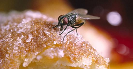 Mosquito na comida - Comer ou jogar fora