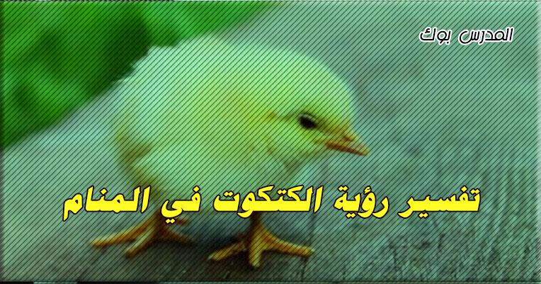تفسير رؤية الكتاكيت في المنام تعرف تفسير حلم خروج الكتاكيت من البيض للحامل
