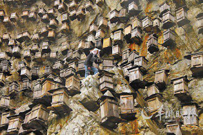 In China, built a skyscraper for bees Planet-Today.com