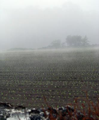 lavoura com neblina