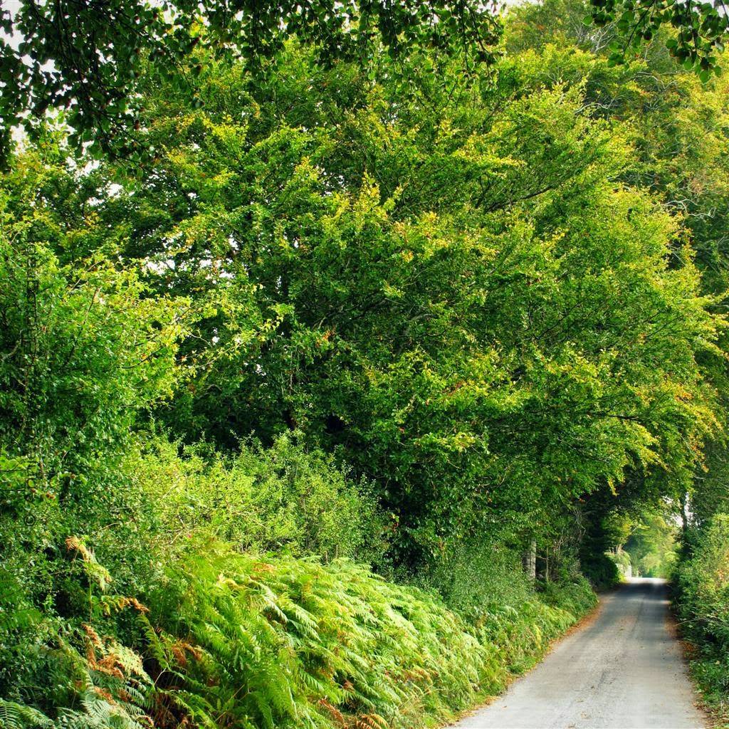 road, green ferns and trees