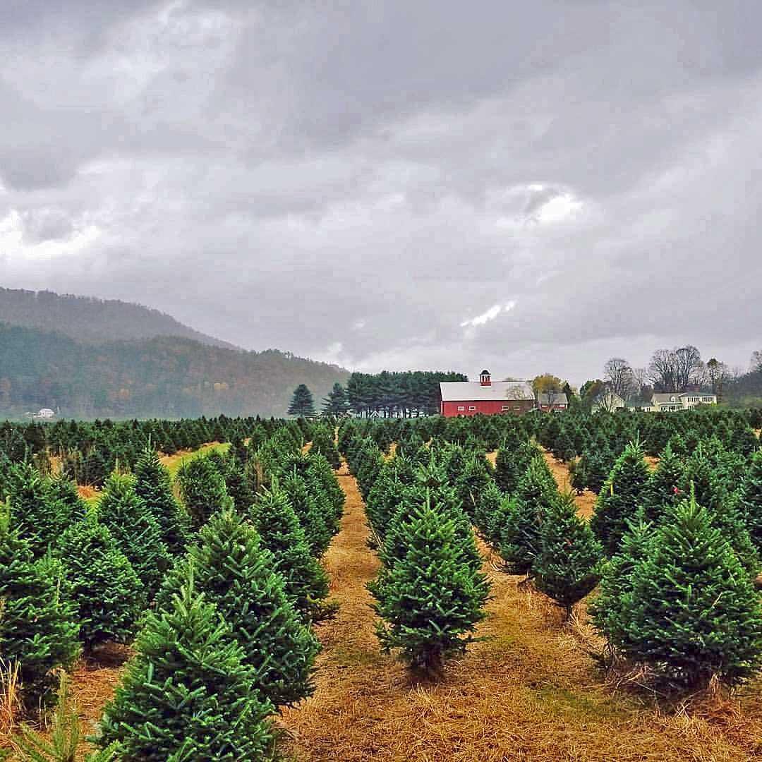 Springfield Vermont News: Business Spotlight: Christmas ...