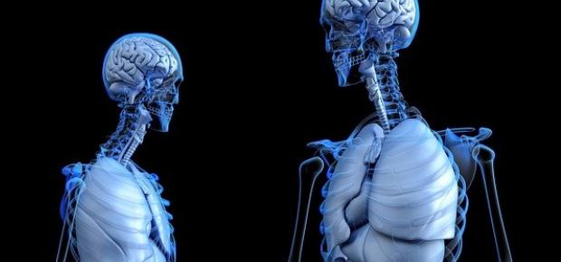 Fisiologia | Hormônios Hipofisários
