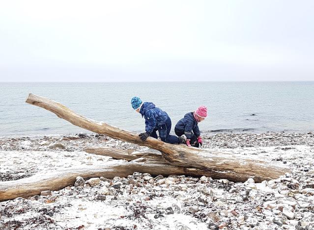 Der Abenteuer-Strand: Rau, steinig, spannend. Ein Baum und die Kinder sind glücklich! In Schleswig-Holstein bei Kiel findet Ihr tolle Strände für Abenteuer!
