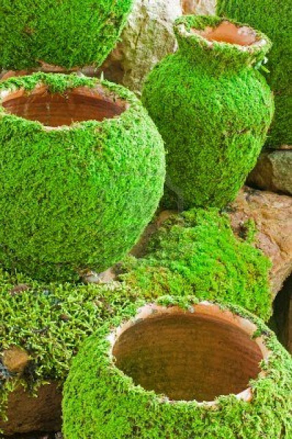 moss growing on pots and stone bench