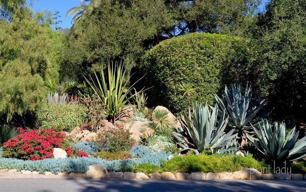 drought-tolerant landscapes - colorful