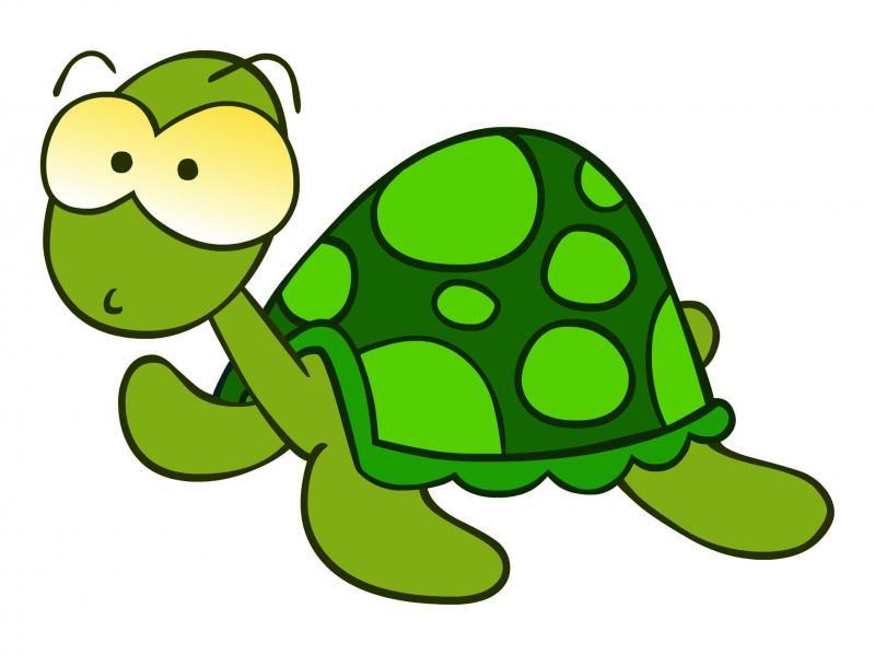 Dibujos Animados De Color Verde: Maestra De Infantil: Tortugas Terrestres Y Marinas