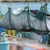 Japan to Restart Commercial Whale-Hunting from July 2019
