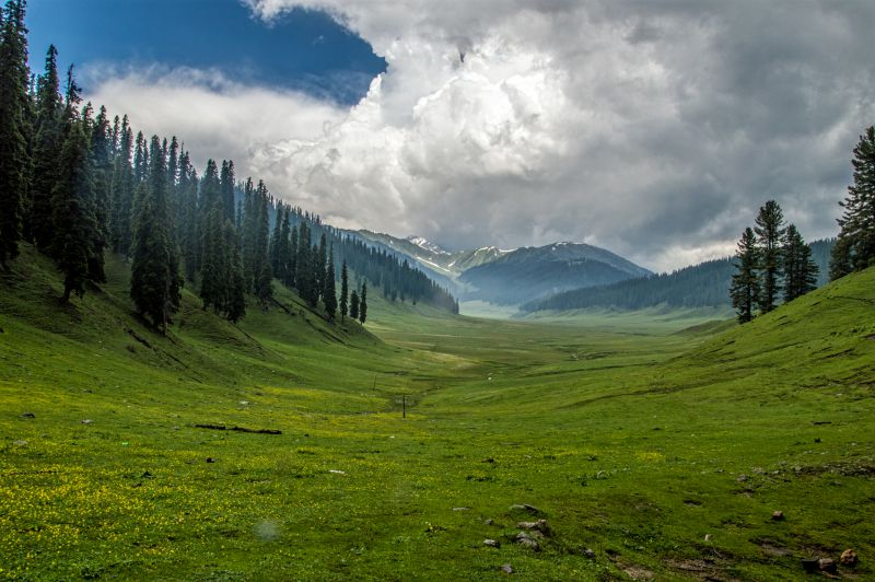 The meadows of Bada Bungus Kashmir