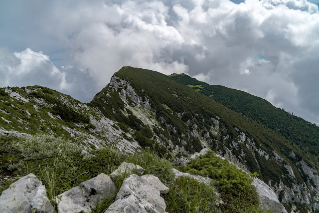 Gamsknogel und Kohleralm  Bergtour Inzell  Wanderung Chiemgauer Alpen 14