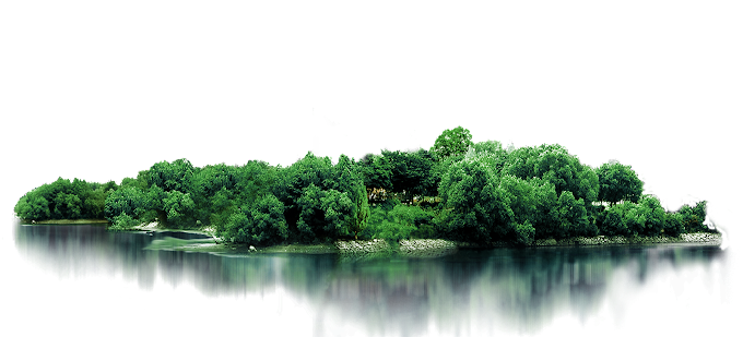 green leafed trees, Tree, Woods, leaf, branch png by: pngkh.com