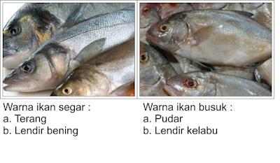 Ciri - Ciri Ikan Segar