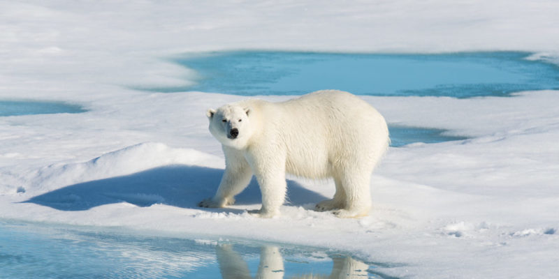 ما هي الأنواع المهددة بالانقراض