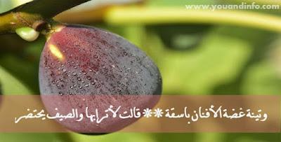 قصيدة التينة الحمقاء – إيليا أبو ماضي