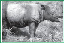 Soal IPA Kelas 6 SD Semester 1 : Keseimbangan Ekosistem