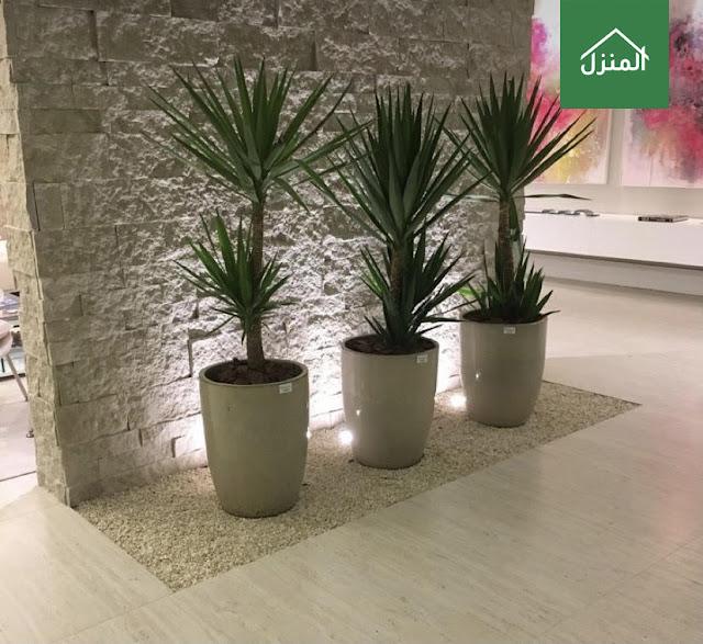 استخدام النباتات المنزلية داخل المنزل