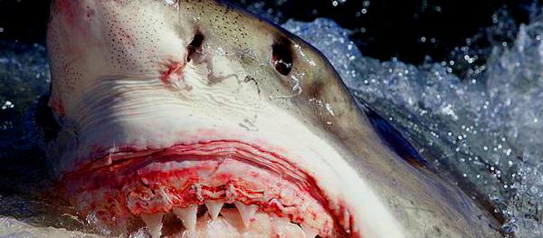 Σοκαριστικό: Καρχαρίας άρπαξε γυναίκα από το χέρι και τη τράβηξε στο νερό (βίντεο)