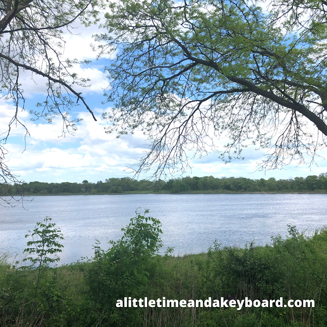 Trees help to frame Hastings Lake.