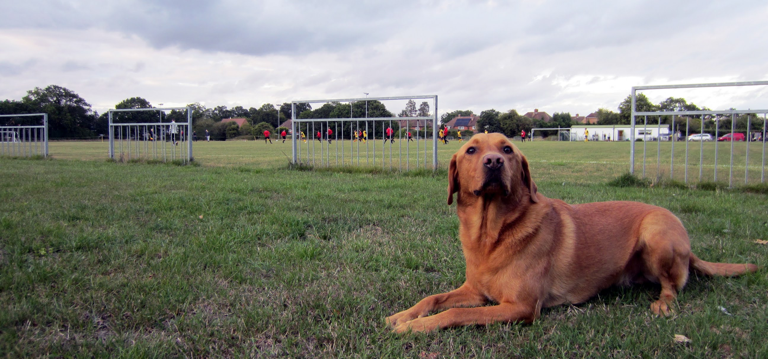 A dog watching the game between Mortimer FC and Cookham Dean FC
