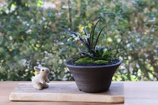 耳付きの板に載せられた黒い鉢の山野草盆栽と信楽焼のウサギの人形