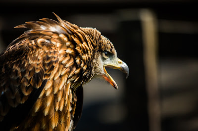 Top 10 Northumberland Attractions as listed by Tripadvisor - Falconry Days
