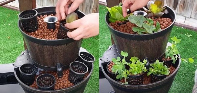 Step 13: Plants