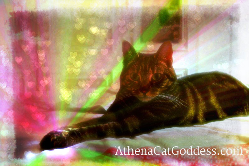Caturday Art: Healing Cat