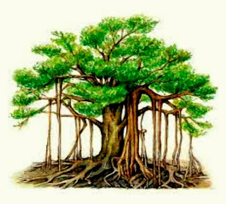 Bargad ke ped ke fayde (Benefits of  Banyan Tree in Hindi).