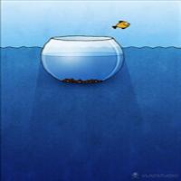 evasione pesce