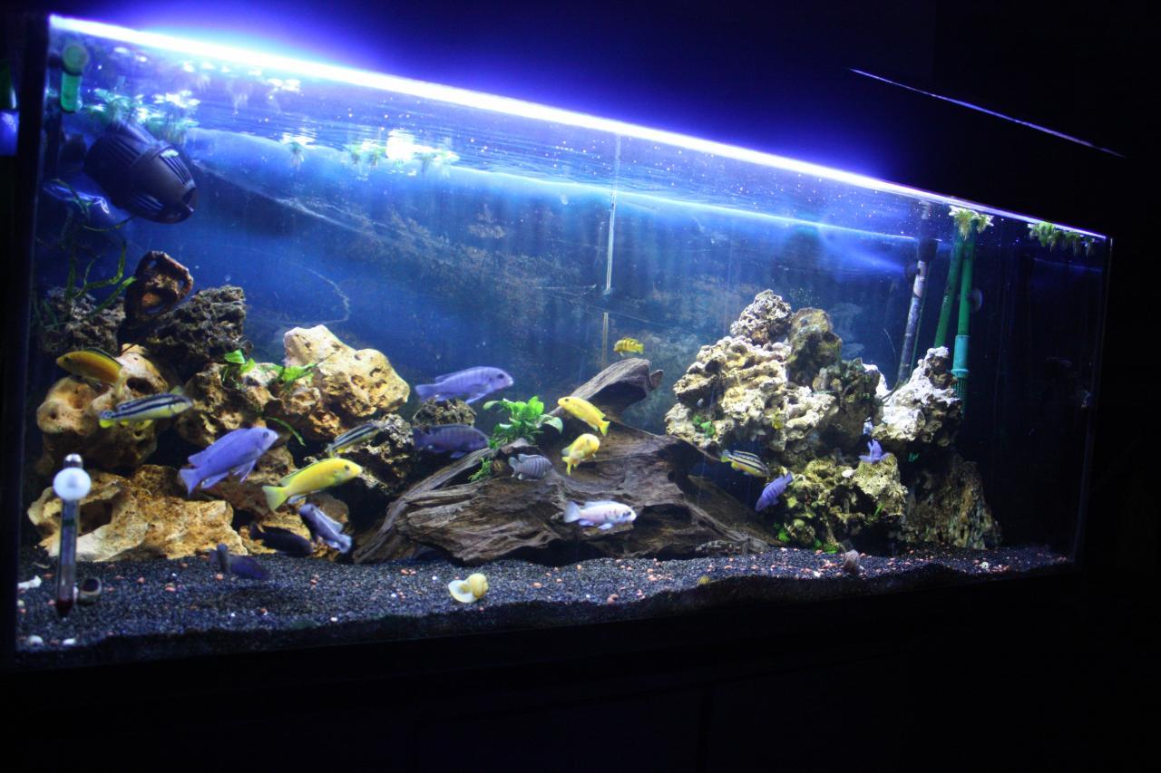 El negocio de los peces acuario kiss for Peces ornamentales acuarios
