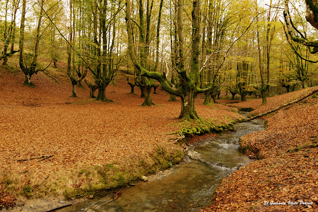 Hayedo de Otzarreta - Parque Natural del Gorbea por El Guisante Verde Project