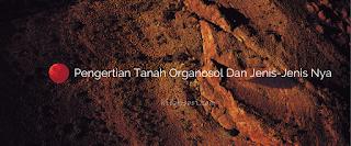 Pengertian Tanah Organosol