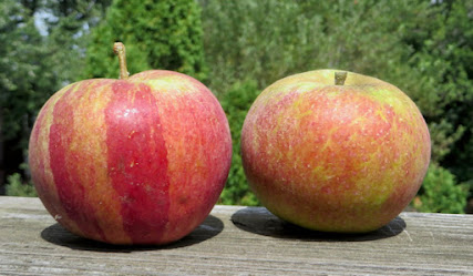 Two orange-red apples. The one on the left has broad saturated stripes.
