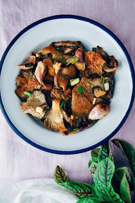 Elm Oyster Mushroom Benefits