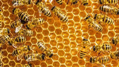 Τις μέλισσες και τα μάτια σας!