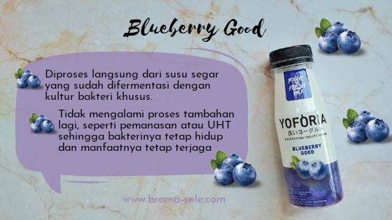 Yoforia Blueberry Good