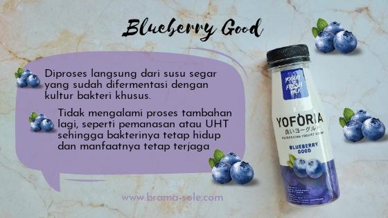 Yoforia Blueberry Good