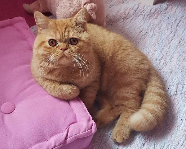 Gambar kucing garfield asli